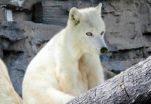 White Wolf 1 All Posts