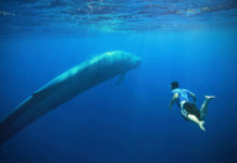 blue whale 1 All Posts
