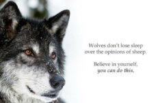 Wolf in sheep clothing 1