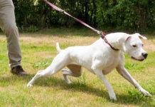 dog leash Joshua 1