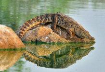 Croc park