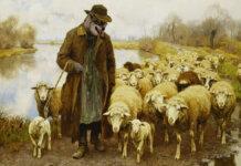 Wolf is shepherd 1